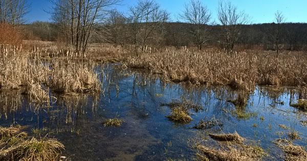 Union Mills Wetlands, Carroll County, Maryland