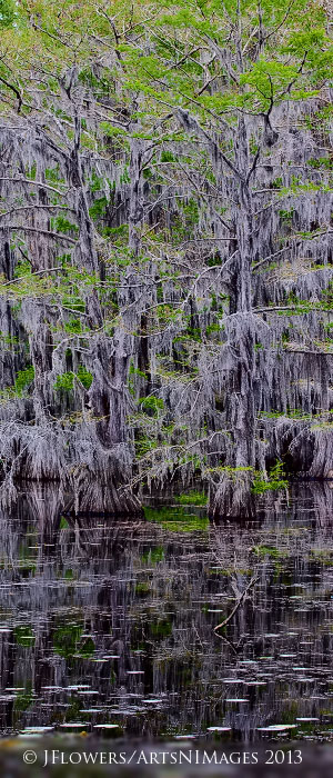 Caddo Lake State Park, Texas