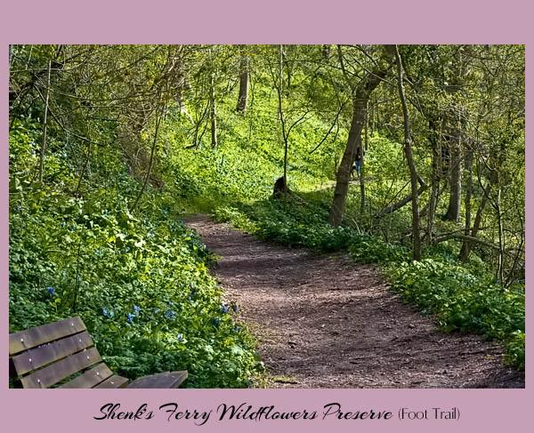 Shenks Ferry Foot Trail 1