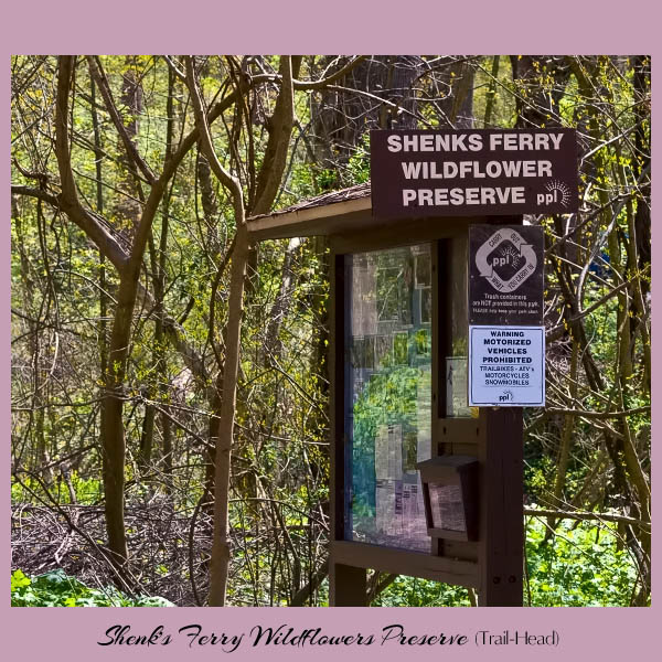 Shenks Ferry Trailhead