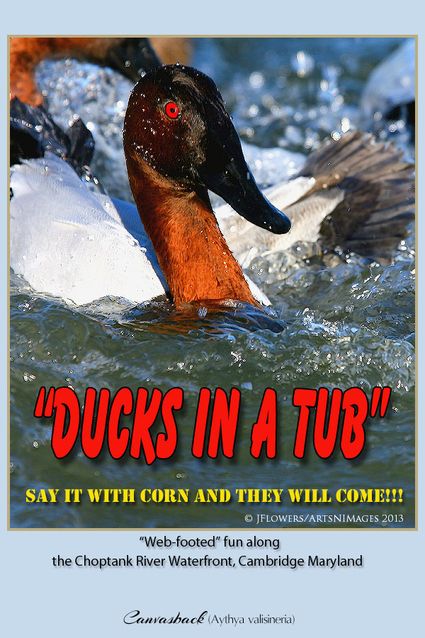 Ducks in a tub title image