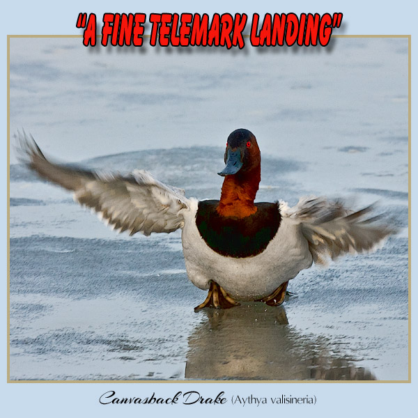 telemark landing