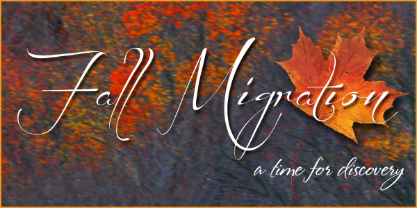 Fall Migration Title
