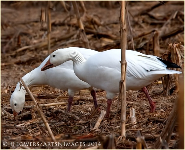 feeding pair